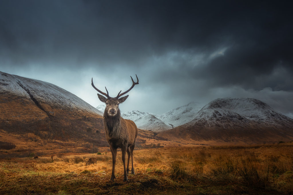 King of Highlands II