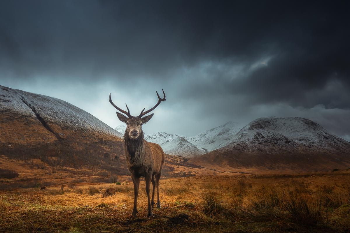 King of Highlands II
