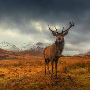 King of Highlands 1