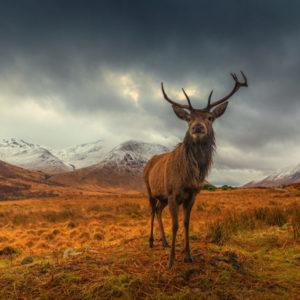 King of Highlands 1